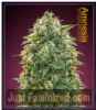 Advanced Auto Amnesia Female 10 Cannabis Seeds